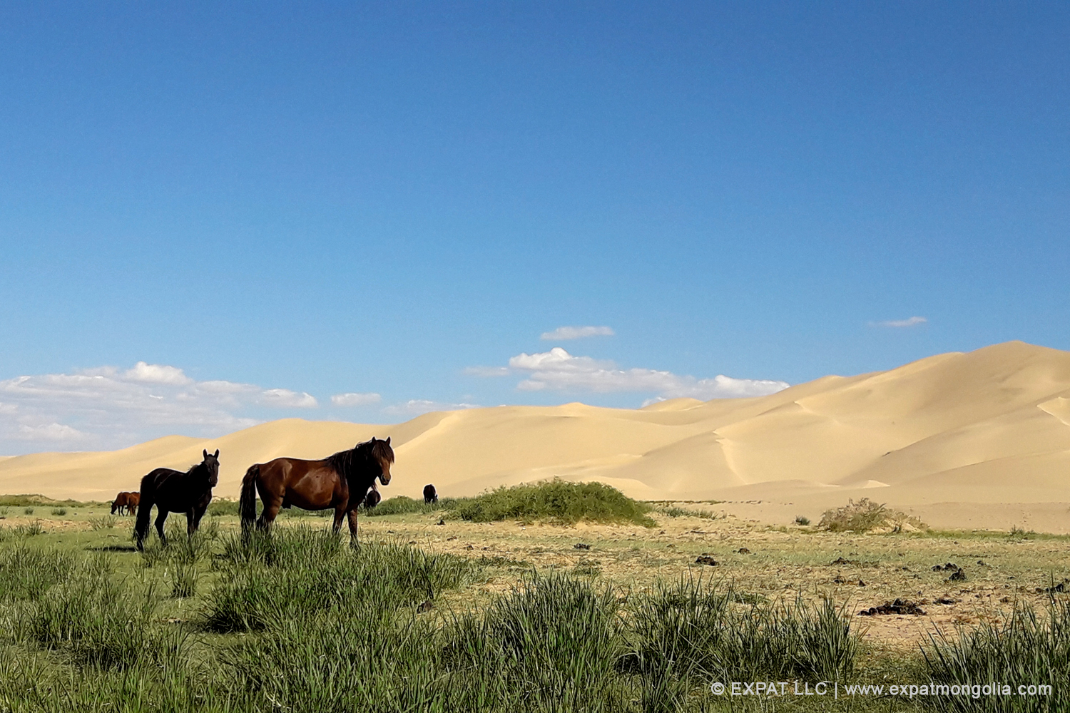 Summer Tours Mongolia